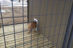 dog kennel buildings for sale